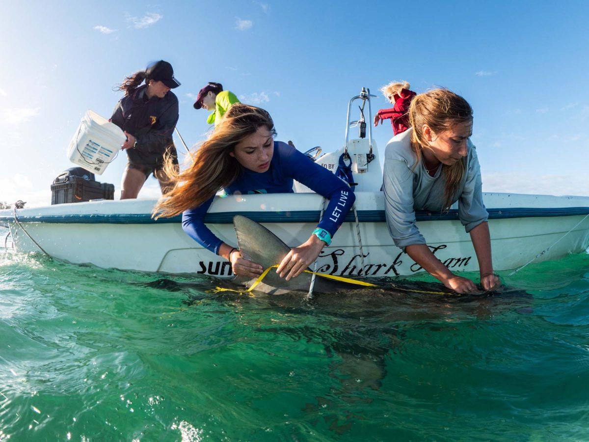 Shark research experience in Bimini Bahamas