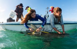 Shark research experience in Bimini Bahamas