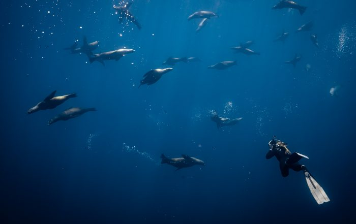 Freediving with sea lions in Mag Bay Baja California Sur