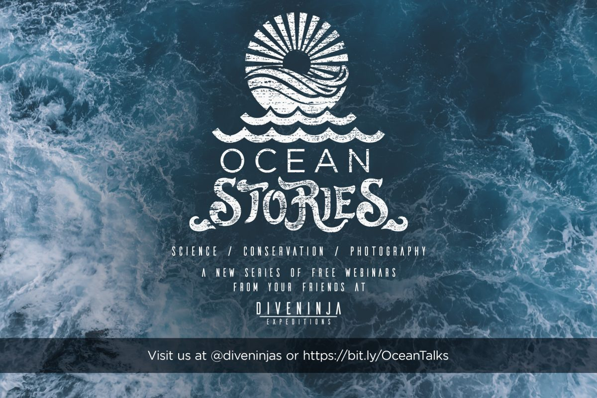 Ocean Stories, a series of over 40 free webinars on marine research, conservation, and more