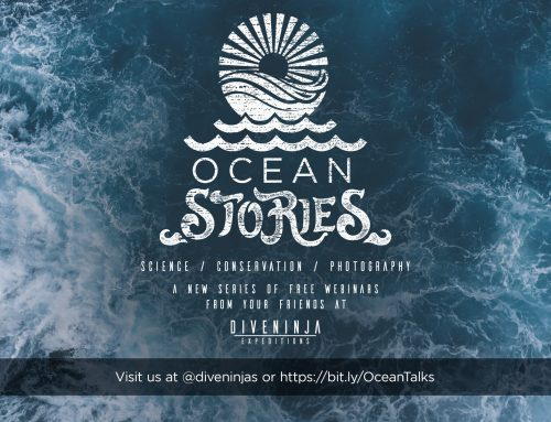 Introducing Ocean Stories