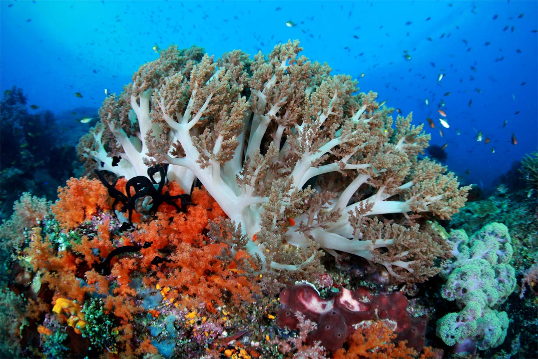 Shark research trip to Bimini Bahamas