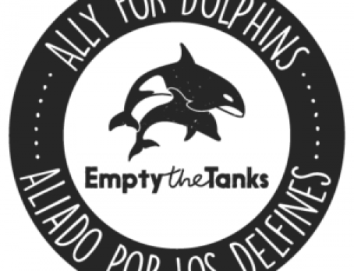 Dive Ninjas is the First Ally for Dolphins Operator In Baja