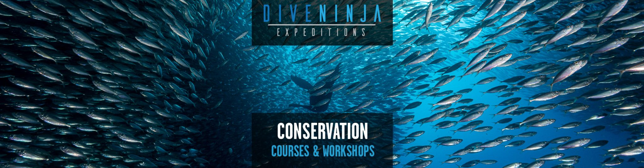 Conservation Courses and Workshops in Mexico