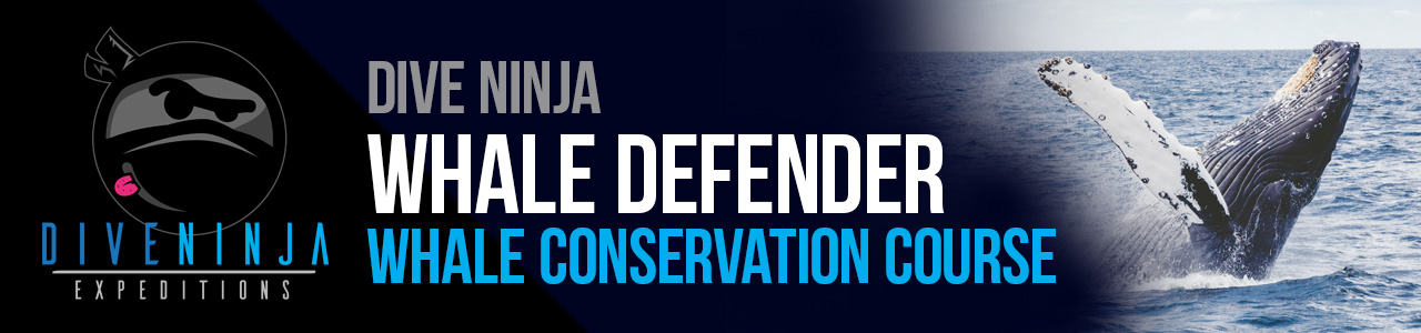 Dive Ninja Whale Defender Conservation Course in Cabo San Lucas Mexico