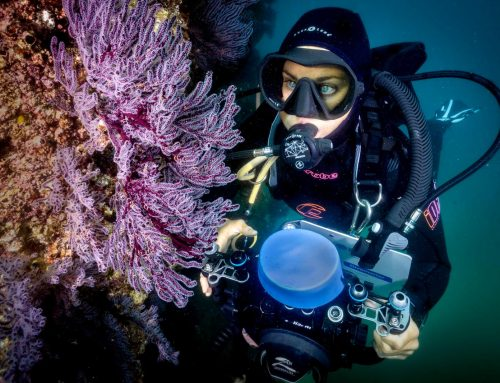 Special Online Coral Reef Conservation Course