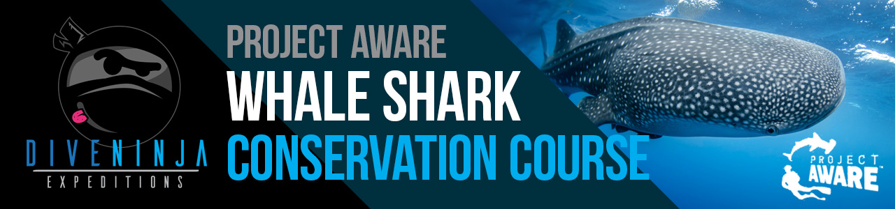 PADI Project AWARE Whale Shark Conservation Course