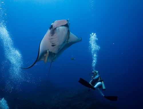 How The RIGHT Divemaster Internship Can Land You Your Dream Job