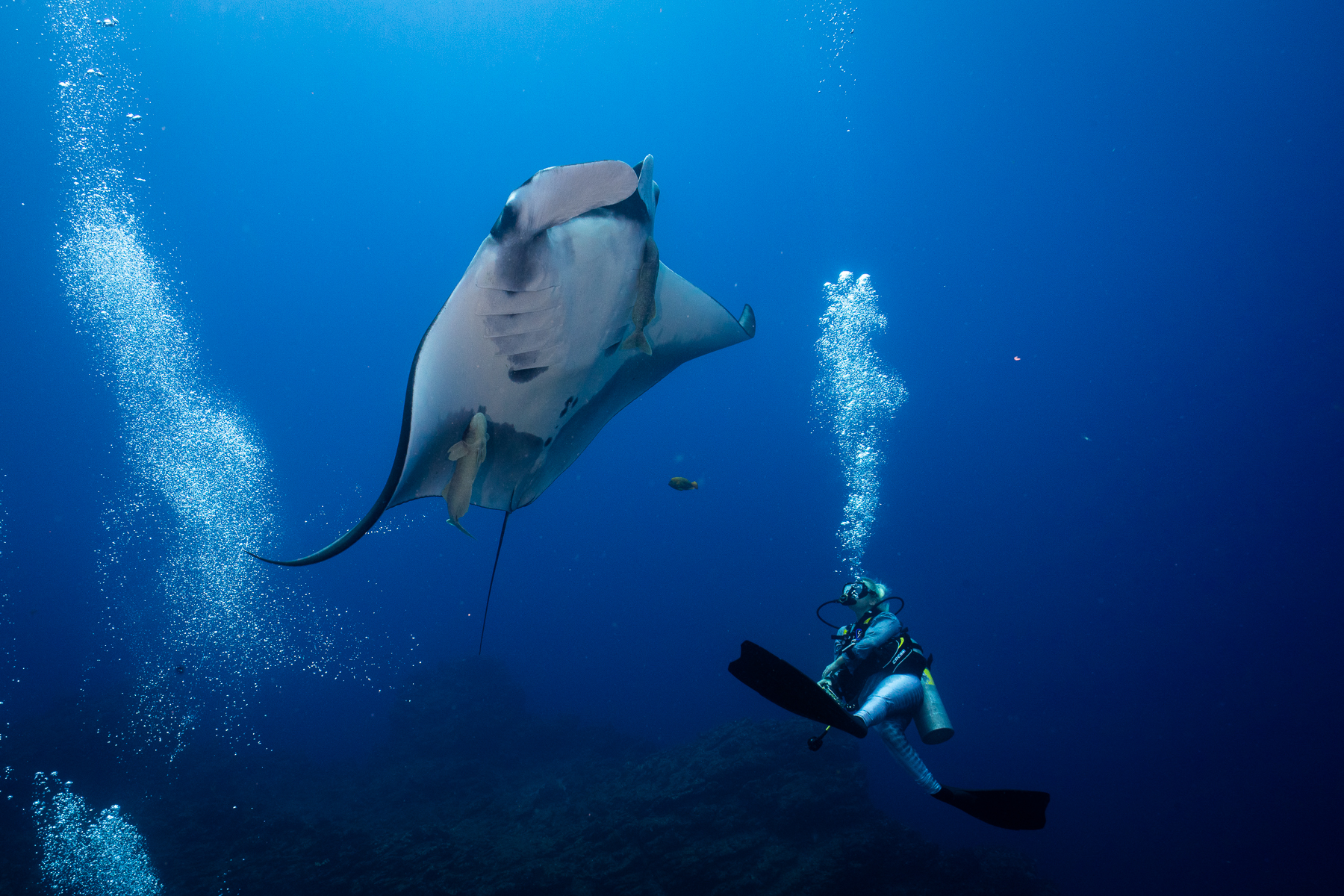 Diving with Oceanic Mantas in Socorro with Dive Ninja Expeditions