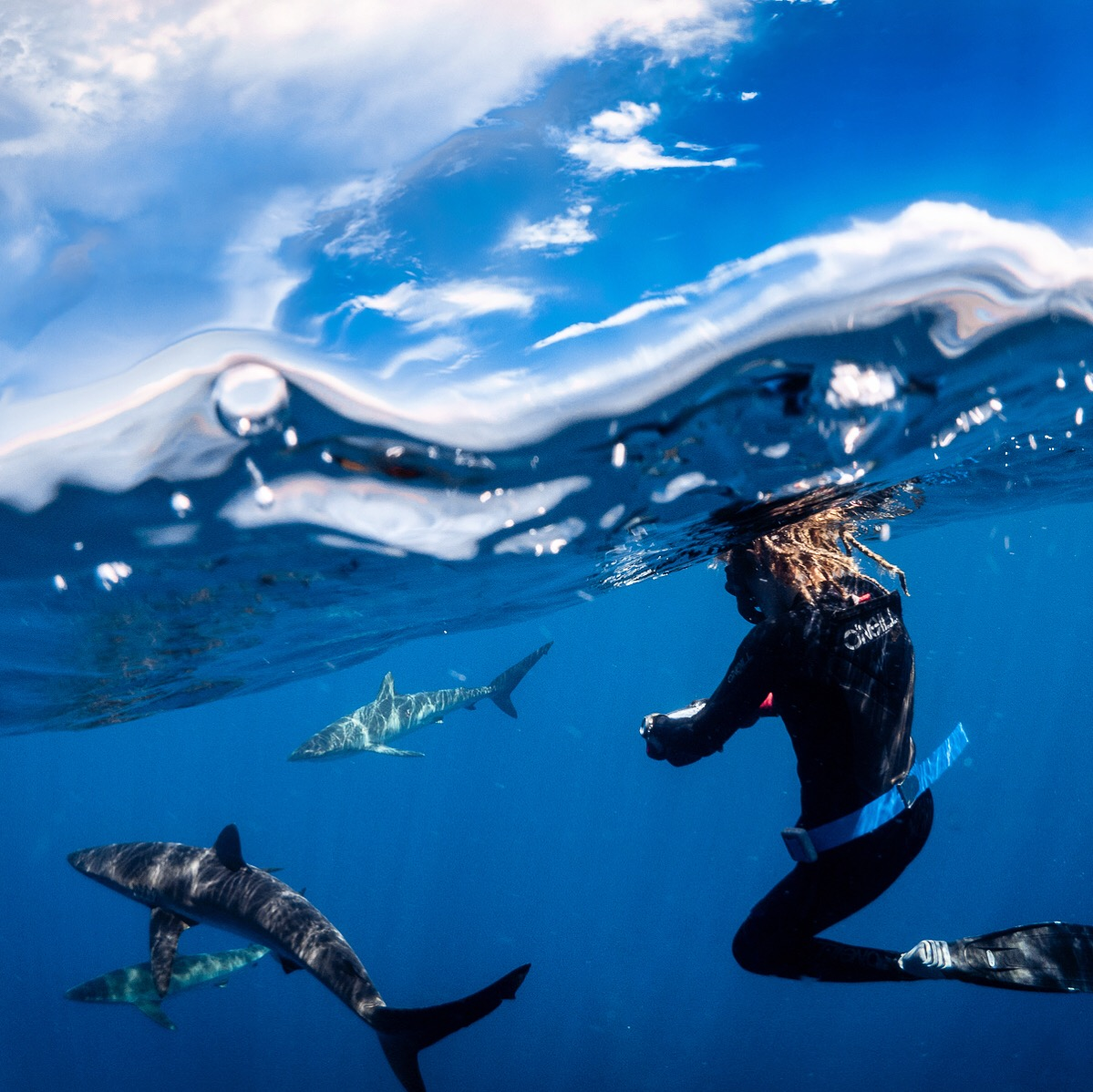 Silky Shark migration & aggregation tours in Los Cabos, Mexico
