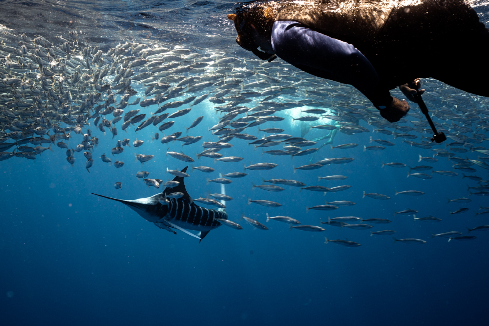 Dive Ninja Expeditions Striped Marlin Expedition, Magdalena Bay, Mexico