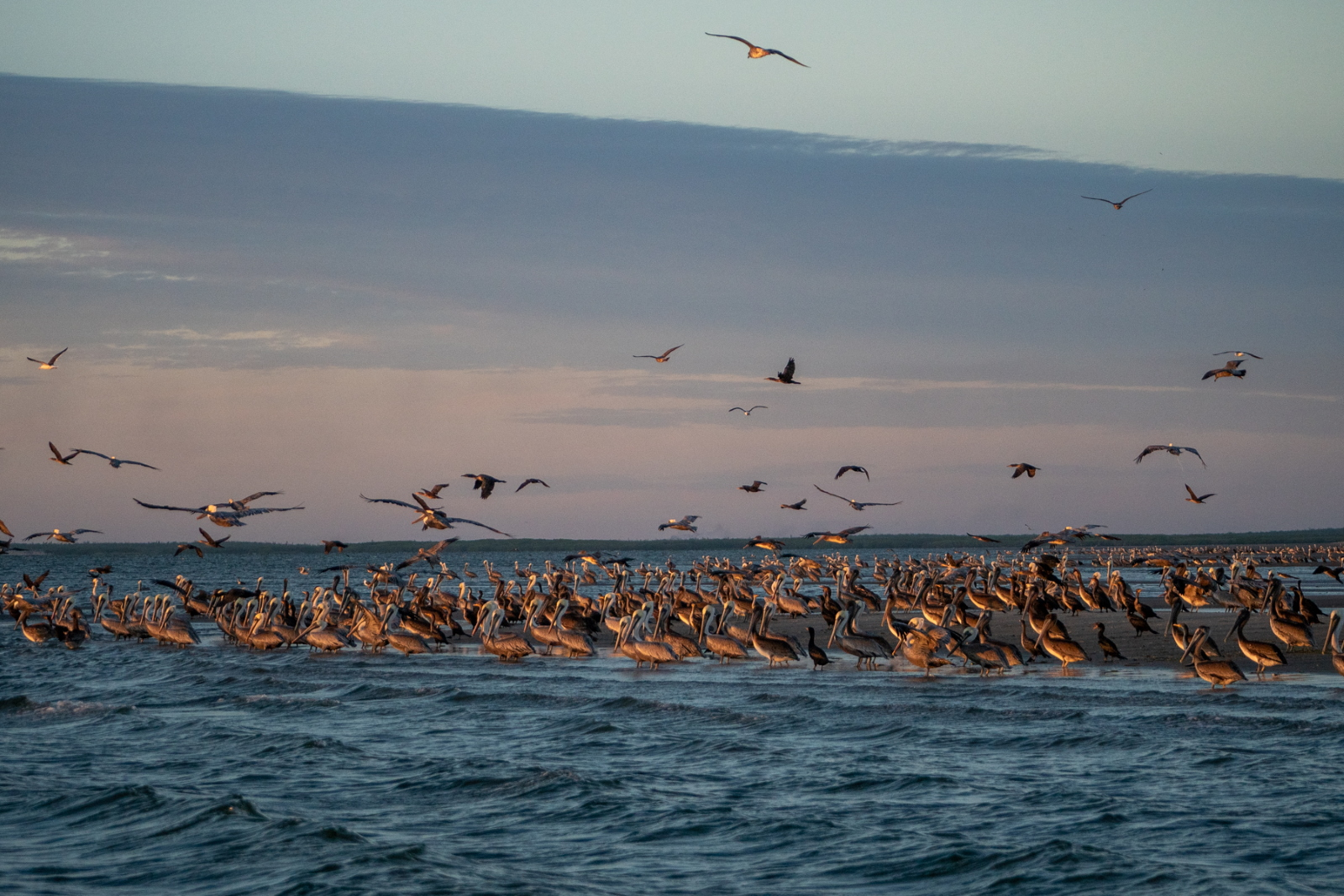 Bird Island, Magdalena Bay, Mexico