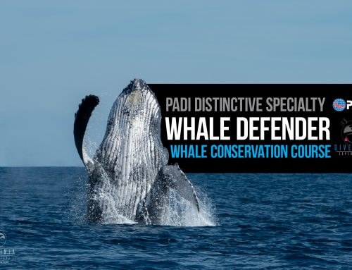 Introducing our New PADI Whale Defender Distinctive Specialty Course