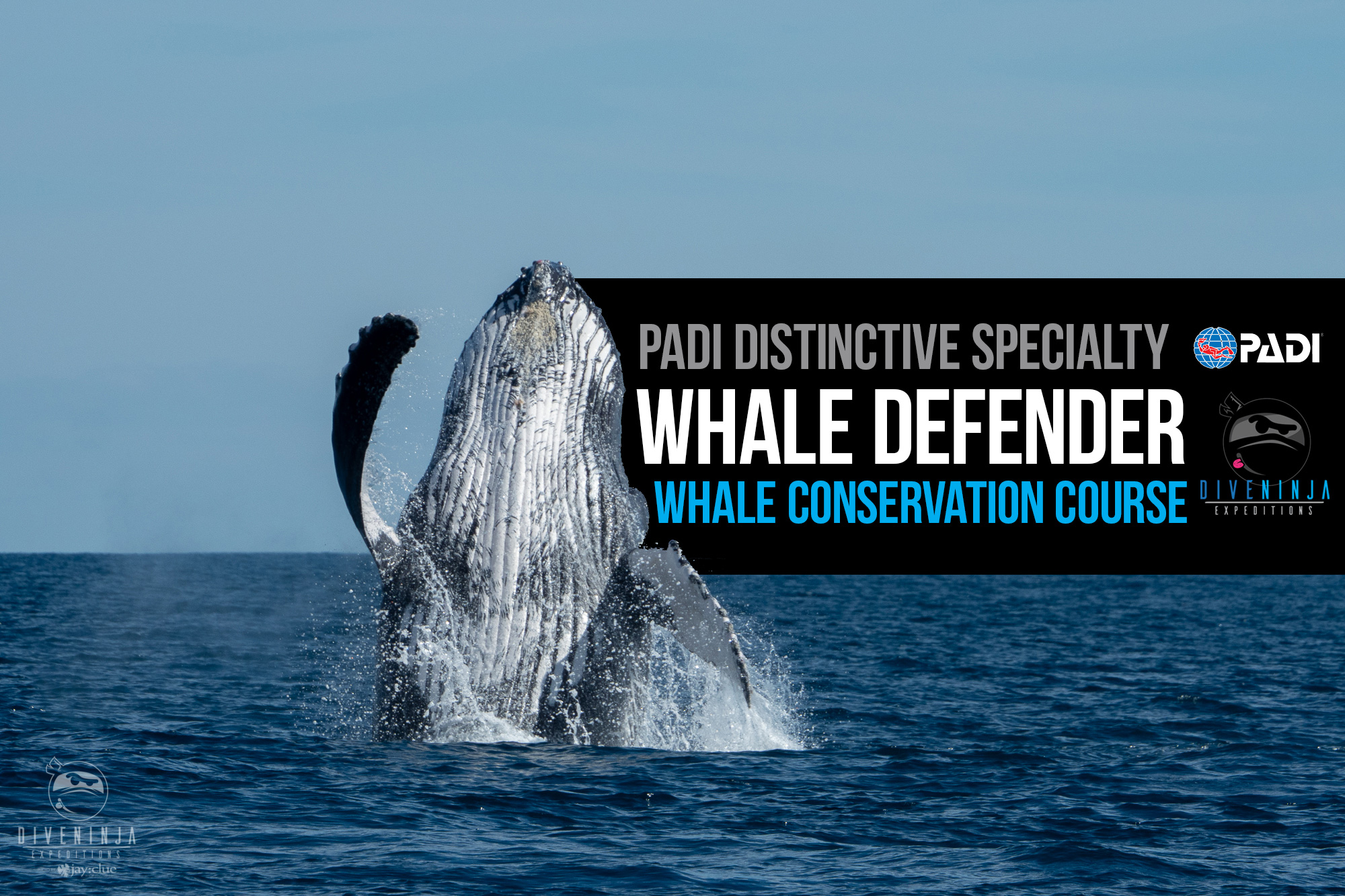PADI Whale Defender distinctive specialty course with Dive Ninja Expeditions