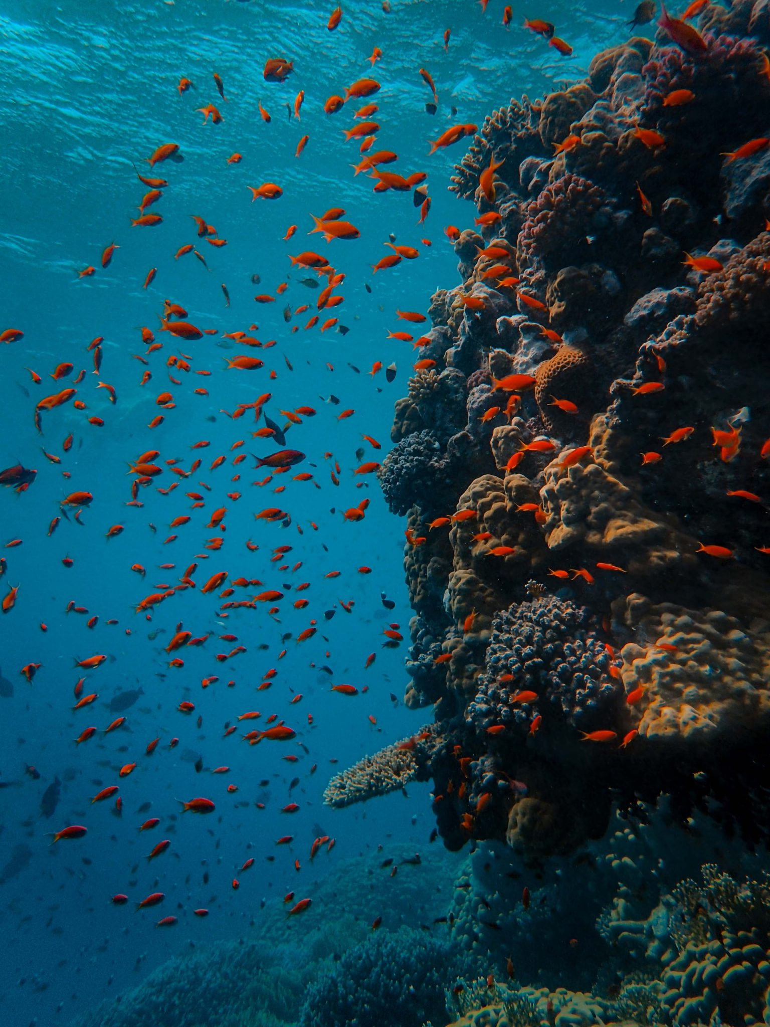 Colorful Reef fish on Wall Dive