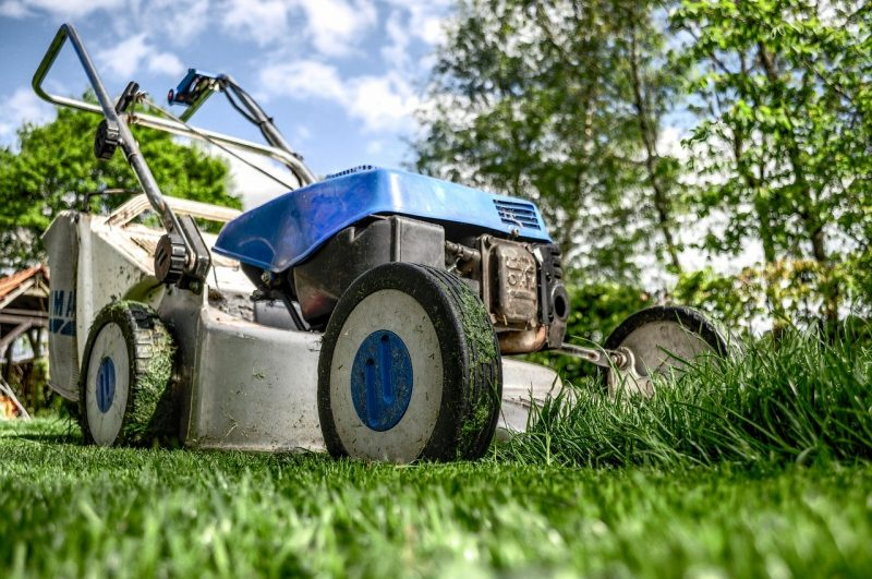 Lawnmowers - manicured grass causes more deaths than sharks