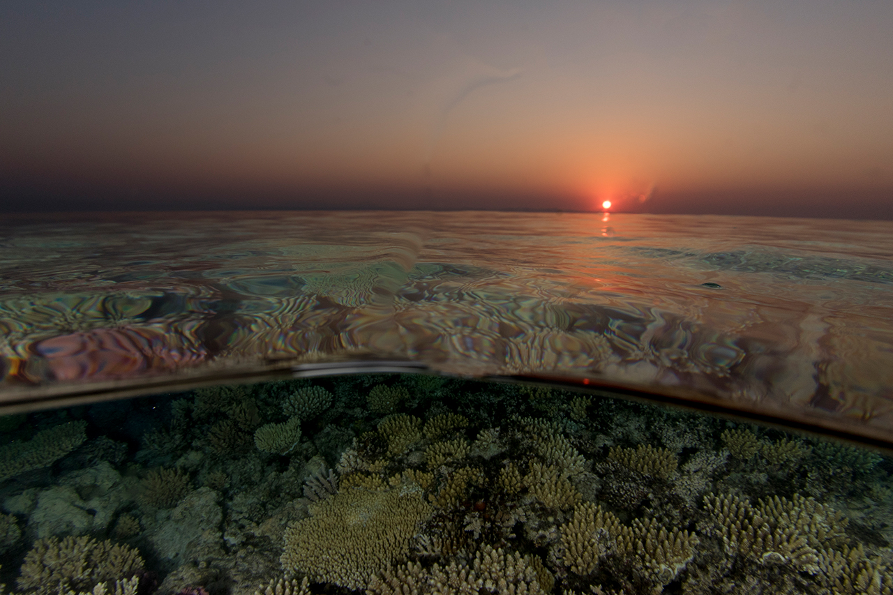 Reefscape Sunset in the Red Sea