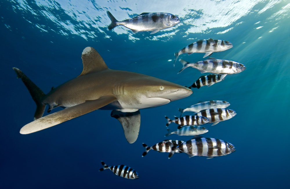 Project Shark Liveaboard trip in the Red Sea