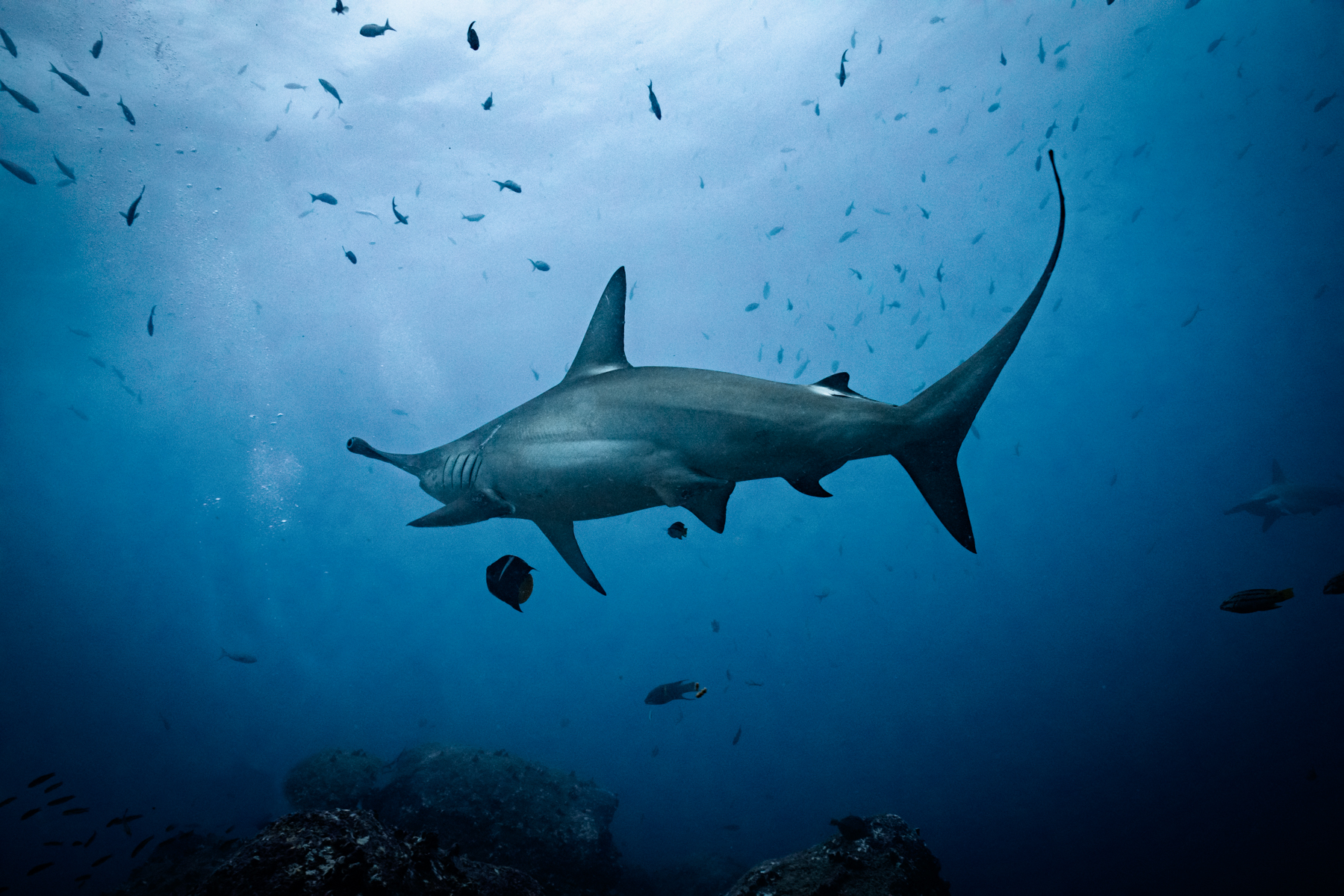 Shark diving in Galapagos with Dive Ninja Expeditions and Girls That Scuba