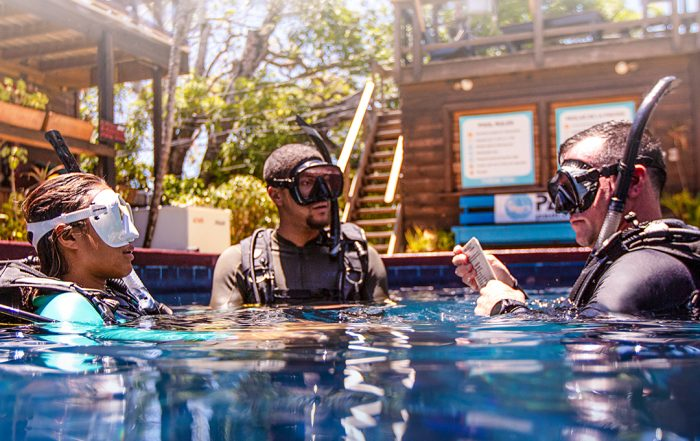 Ninja PADI Instructor Development Course & PADI IDC Center in Cabo San Lucas, Mexico