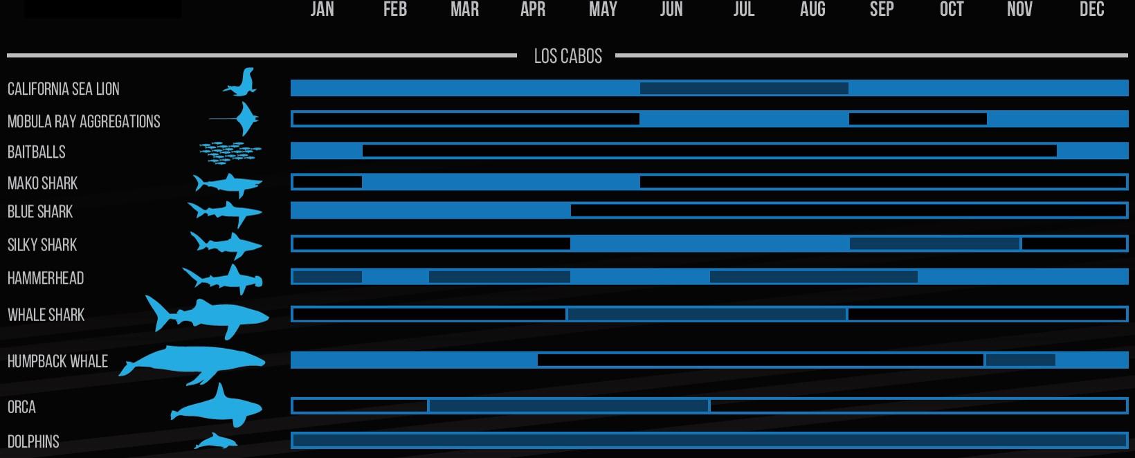Cabo Wildlife Calendar