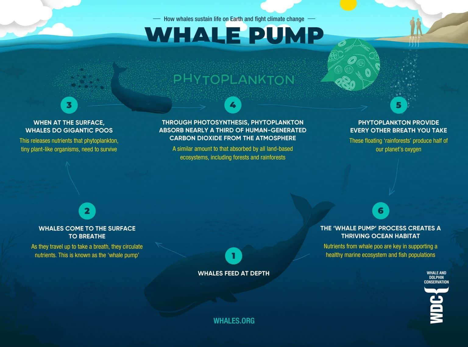 Whale Pump - WDC
