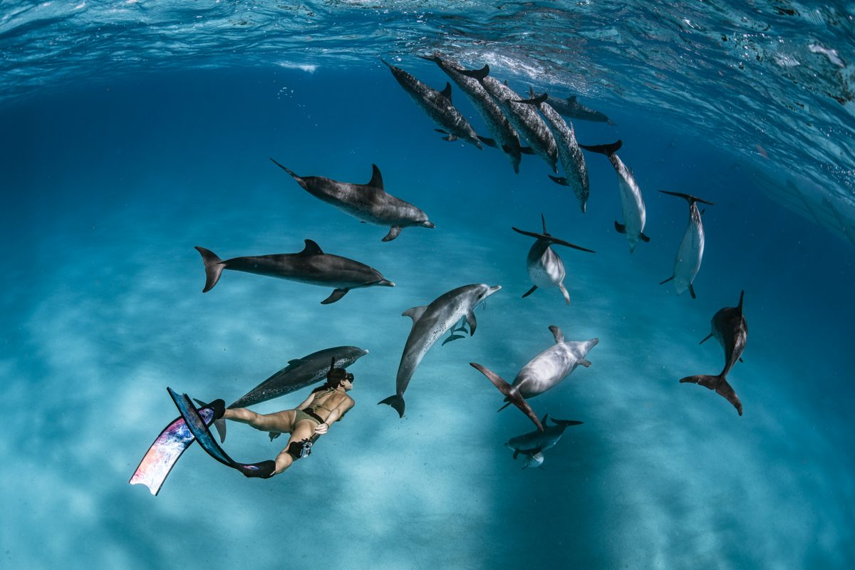Freediving with spotted dolphins in Bimini, the Bahamas with Dive Ninja Expeditions. Photo by Jay Clue