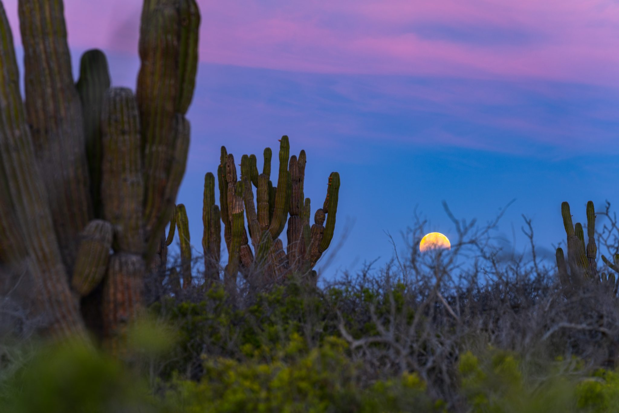 Full moon at dawn with cactus in Baja Mexico by Stan Moniz. Landscape photography workshop